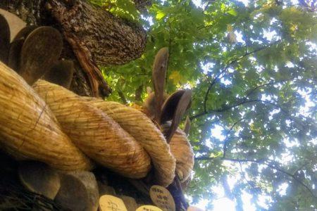 森の巨人たち100選  千本ナラ